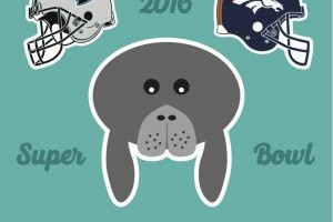 Cheer on Mote's manatees as they predict the Super Bowl 50 winner