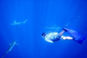 Cuba research to make splash on Discovery Channel's Shark Week