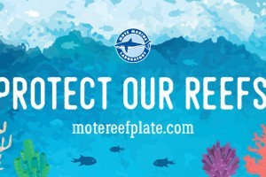 Mote launches new Protect Our Reefs website