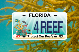 Show Your Love for Our Oceans with the Protect our Reefs license plate.