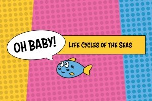Oh Baby! Life Cycles of the Seas