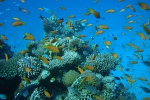 Coral reefs of the Middle East