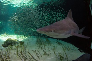 Mote Marine Laboratory receives fin-tastic boost from shark conservationist