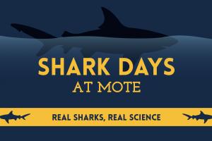 Shark Days at Mote: Aug. 15-20