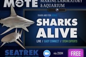 Sharks Alive - livestream