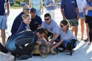 Sea Turtle Rescued by Coast Guard released after care at Mote Marine Lab